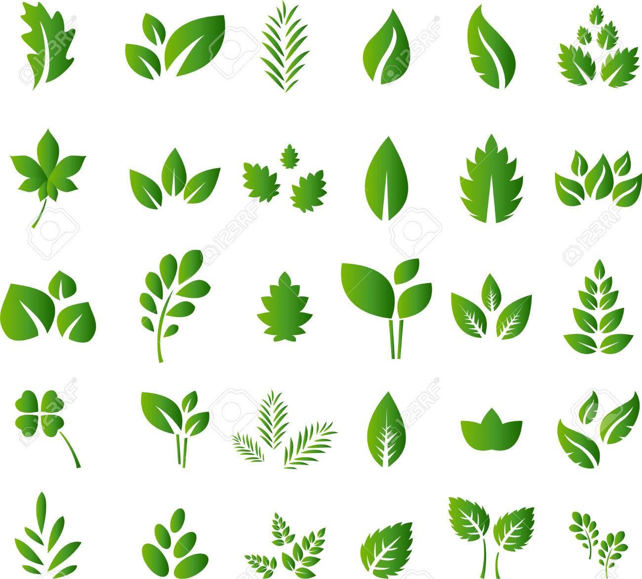 Set of green leaves design elements for you design - 41504123
