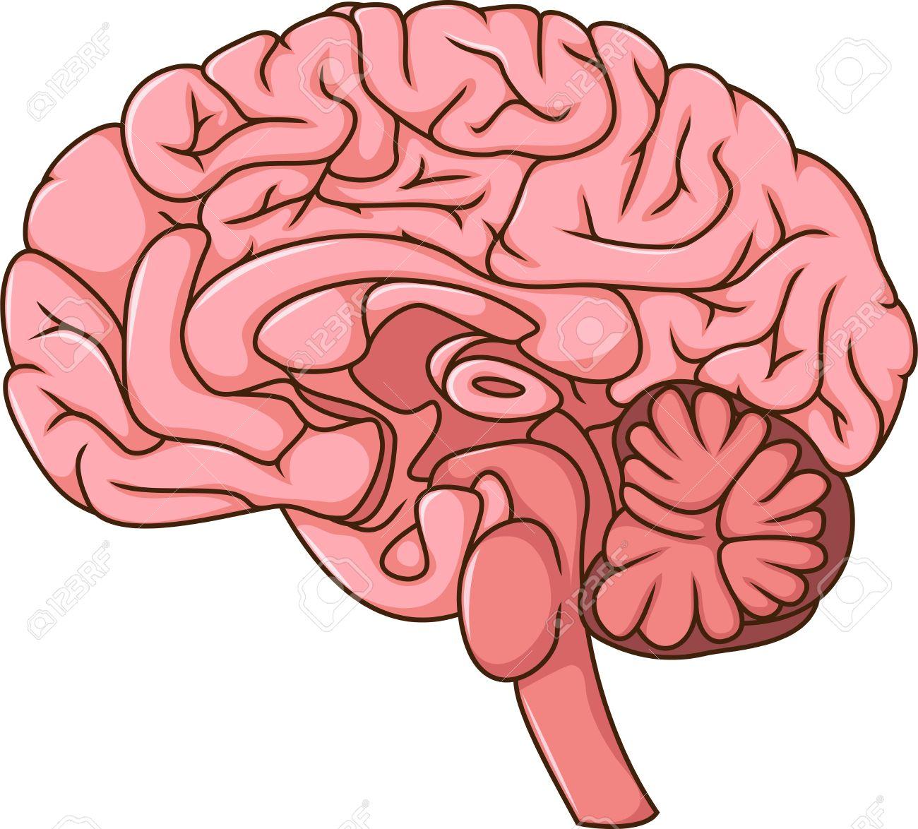human brain cartoon royalty free cliparts vectors and stock