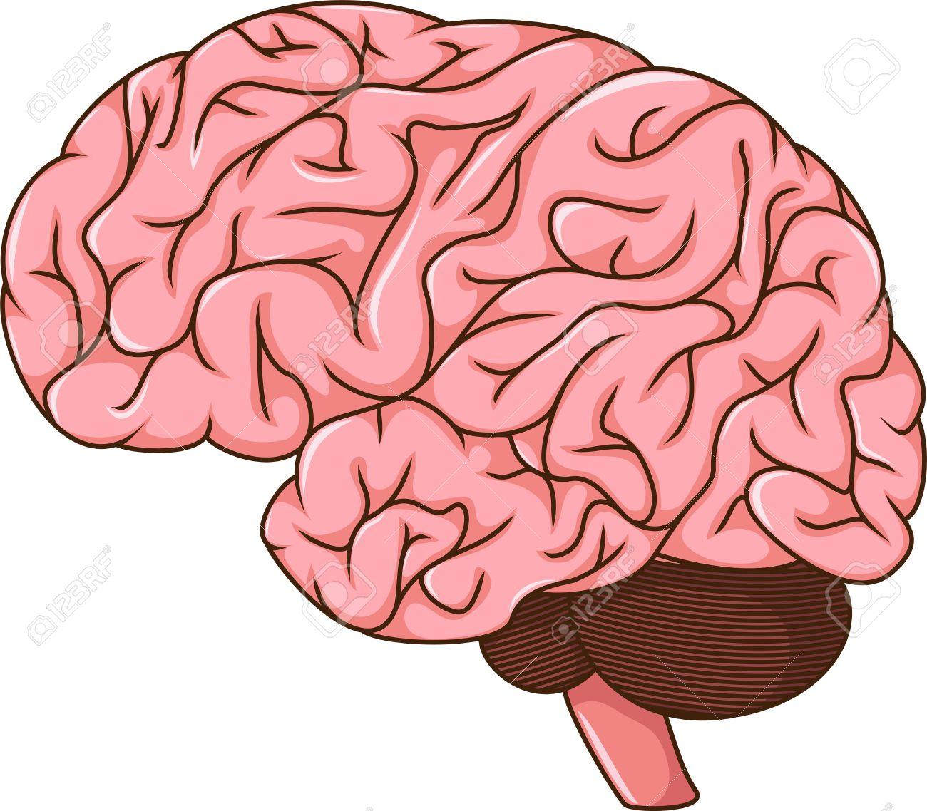 human brain cartoon royalty free cliparts vectors and stock rh 123rf com cartoon brain pics Easy Cartoon Brain