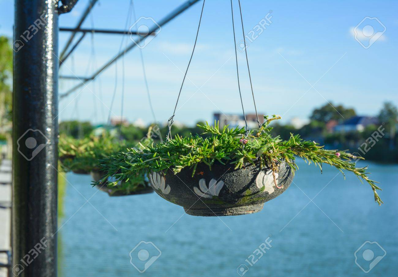 Plant In Baked Clay Hang On Steel Wire In Natural Park Stock Photo ...