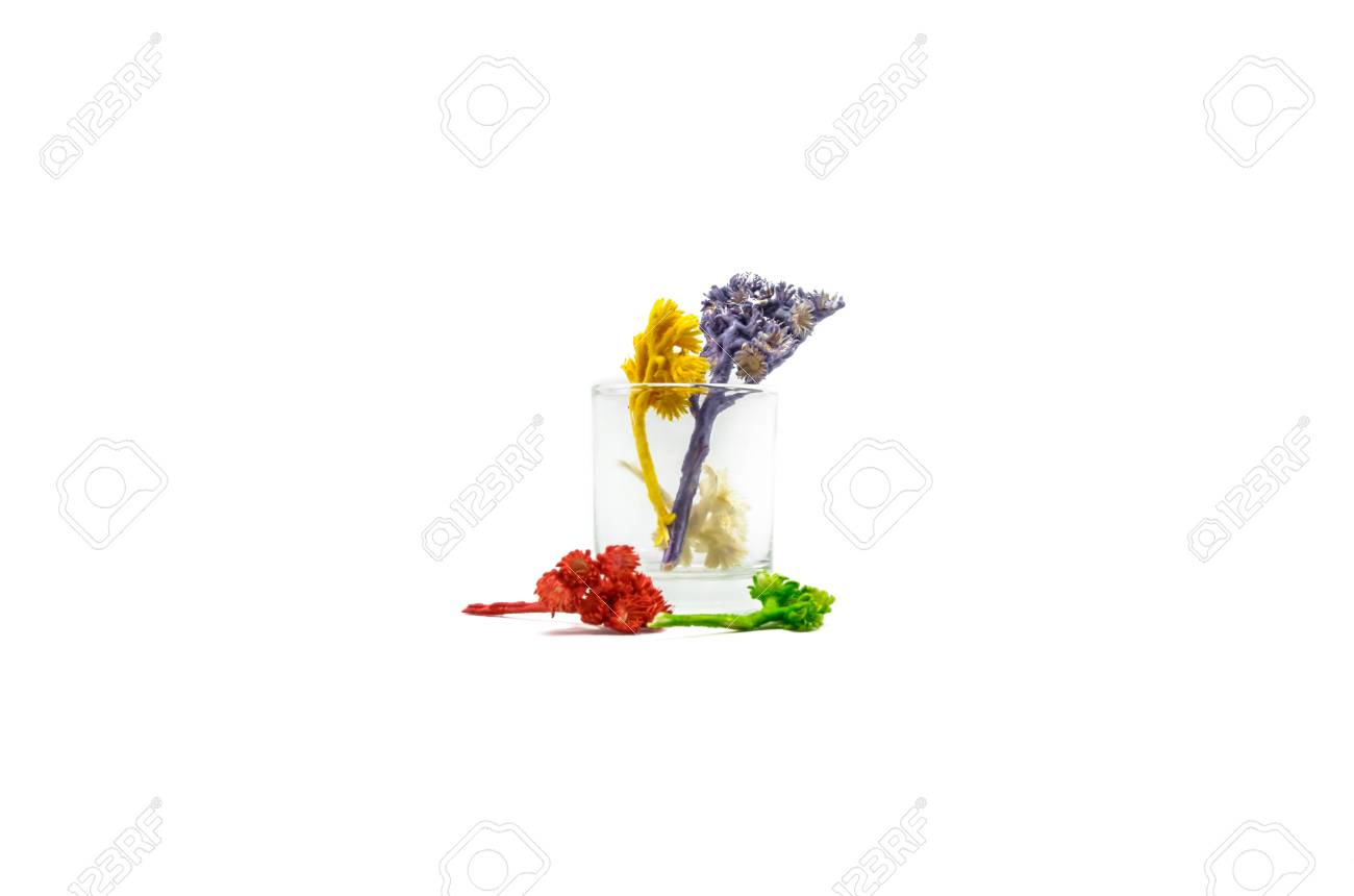 small colour flower plant in glass for decoration isolated on white background Stock Photo - 21389287