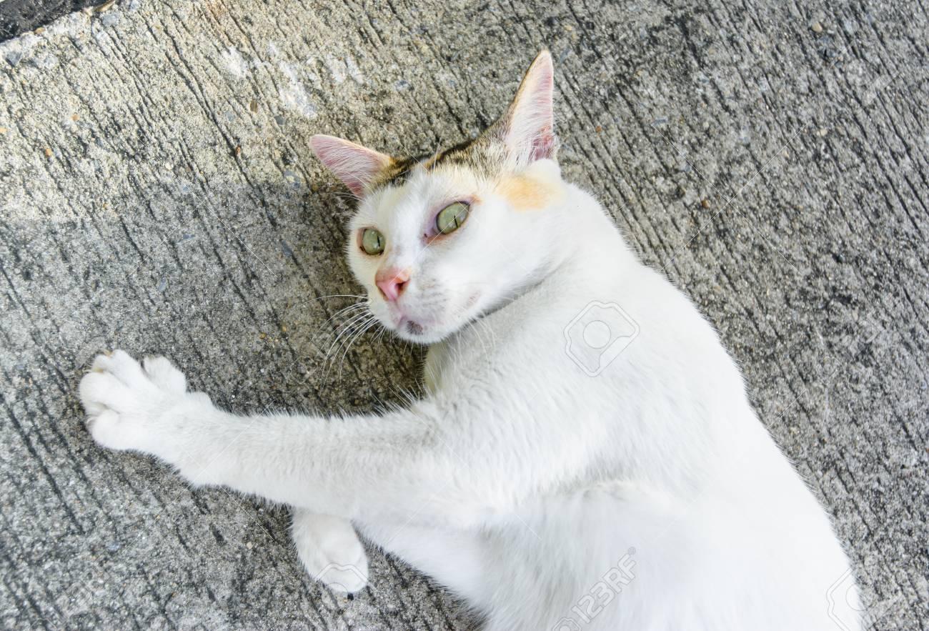 doux vieux noir chatte réel adolescent Cam porno