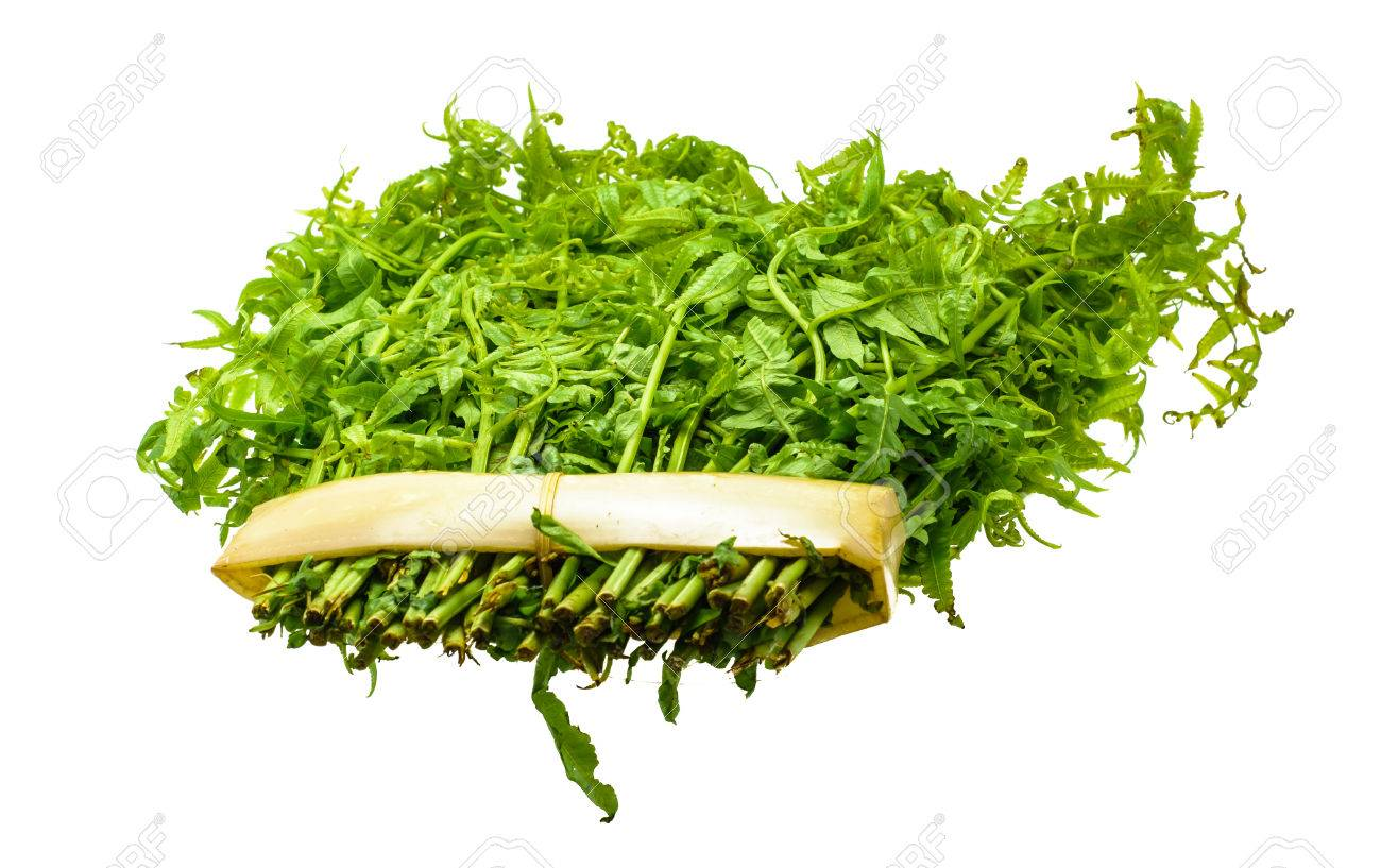 green leaves of vegetable fern for cook isolated on white background Stock Photo - 27872049