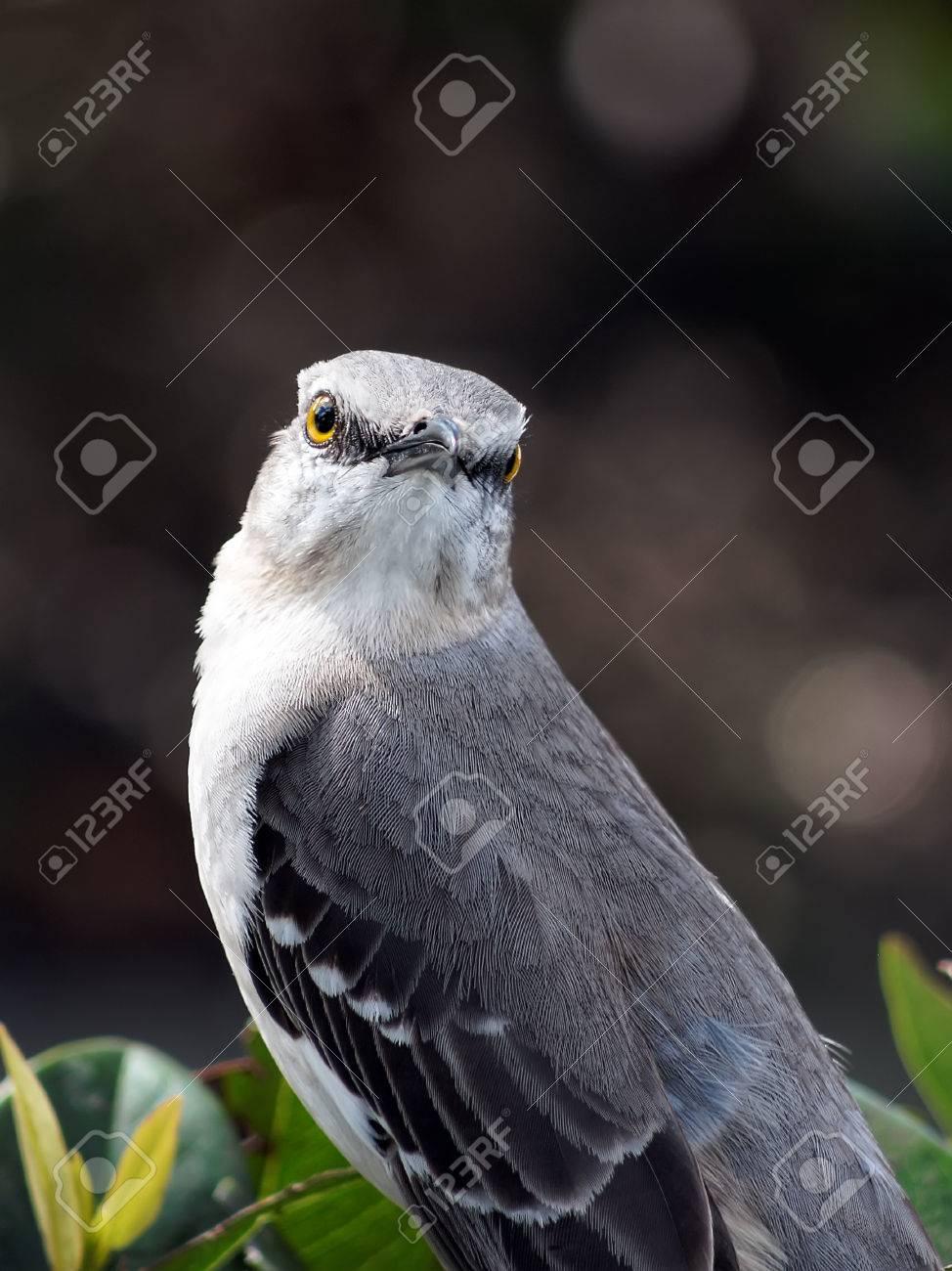 Florida State Bird - Looking At Me