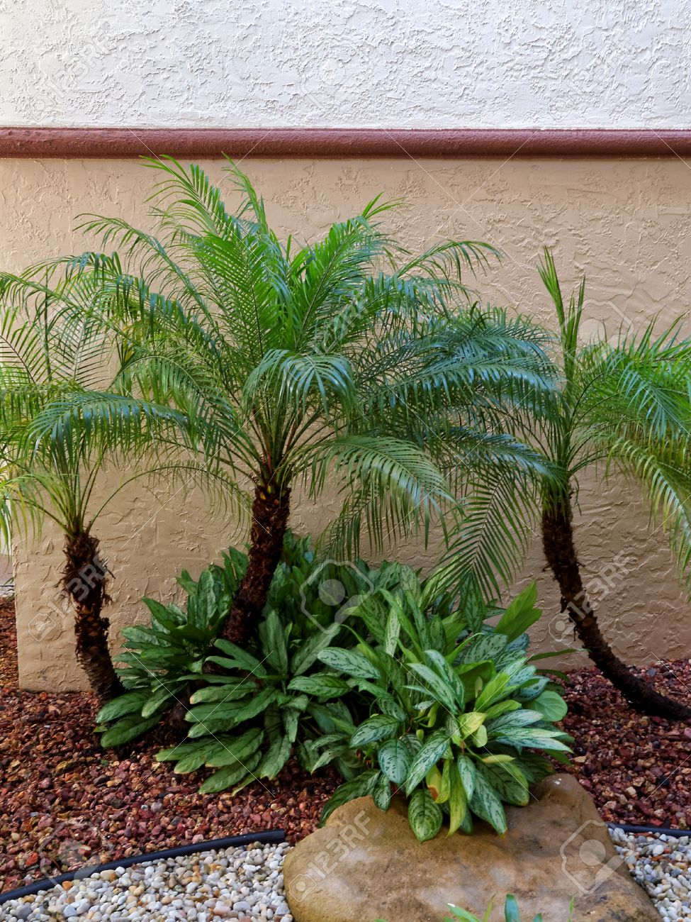 Small Palm Trees in rock garden with foliage brown rocks and.. on shrubs around tree, waterfall around tree, border around tree, putting pavers around tree, hosta around tree, wood bench around tree, flowers around tree, plants around tree, block wall around tree, orchid around tree, roses around tree, iris around tree, patio around tree, pergola around tree, sculpture around tree, pond around tree, container gardening around tree, vine around tree, gazebo around tree, ground cover around tree,
