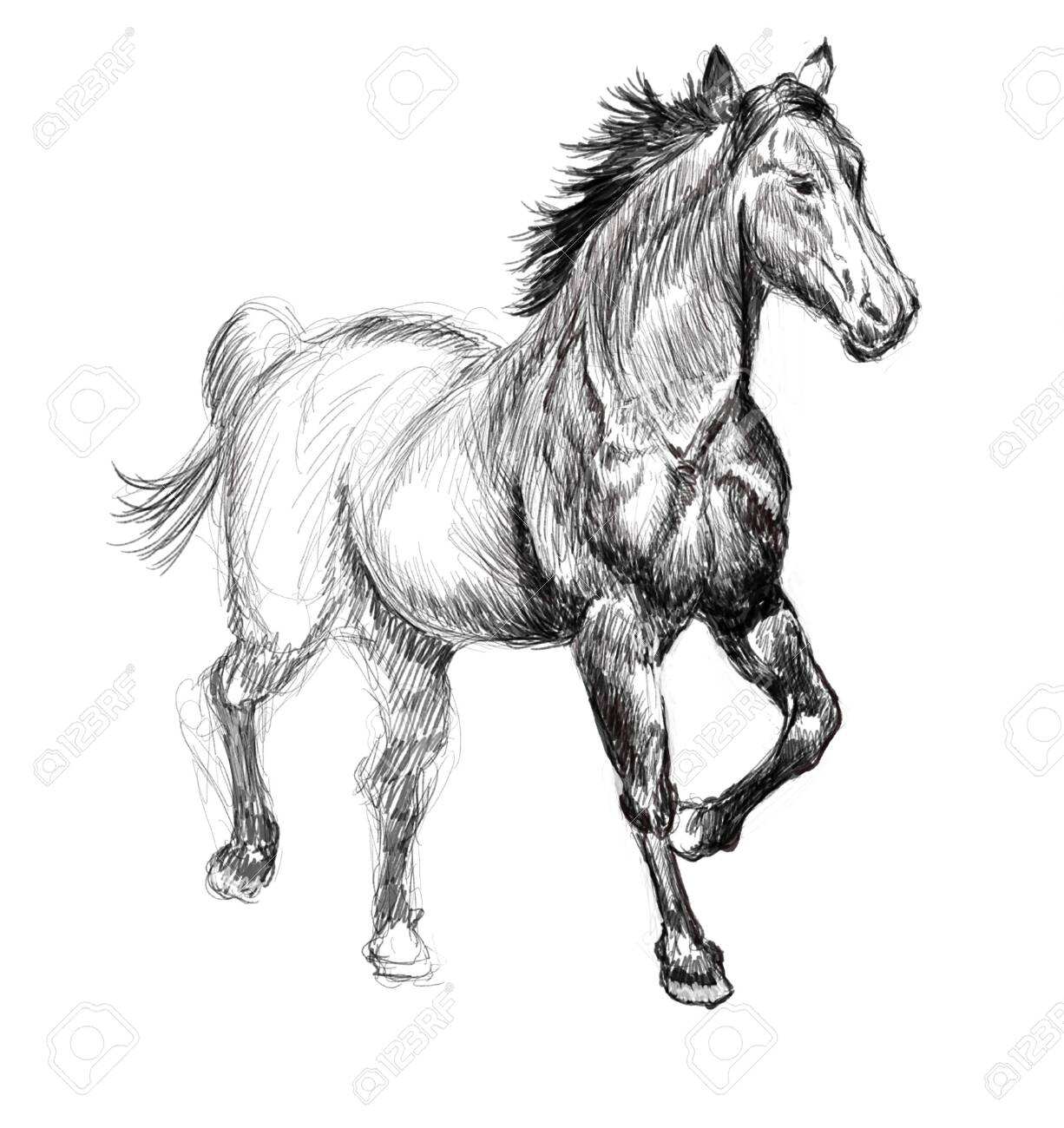 Horse Hand Drawn Illustration Art Design Wall Inspiration Stock Photo Picture And Royalty Free Image Image 135359286