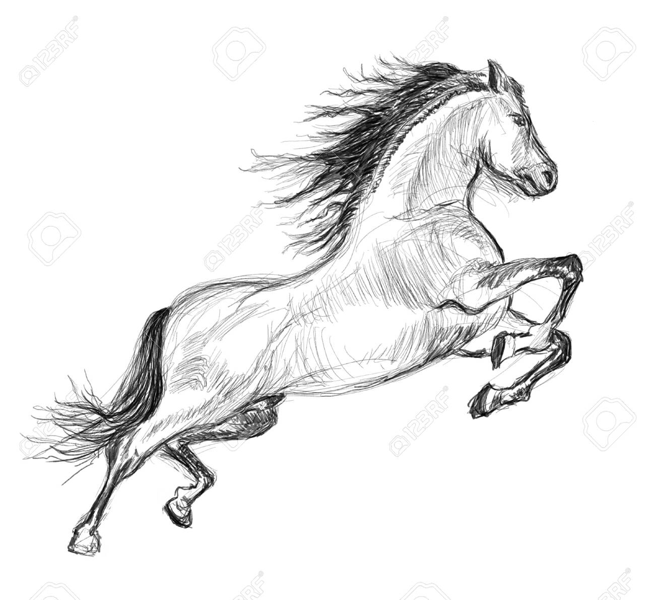 Horse Hand Drawn Illustration Art Design Wall Inspiration Stock Photo Picture And Royalty Free Image Image 135359290