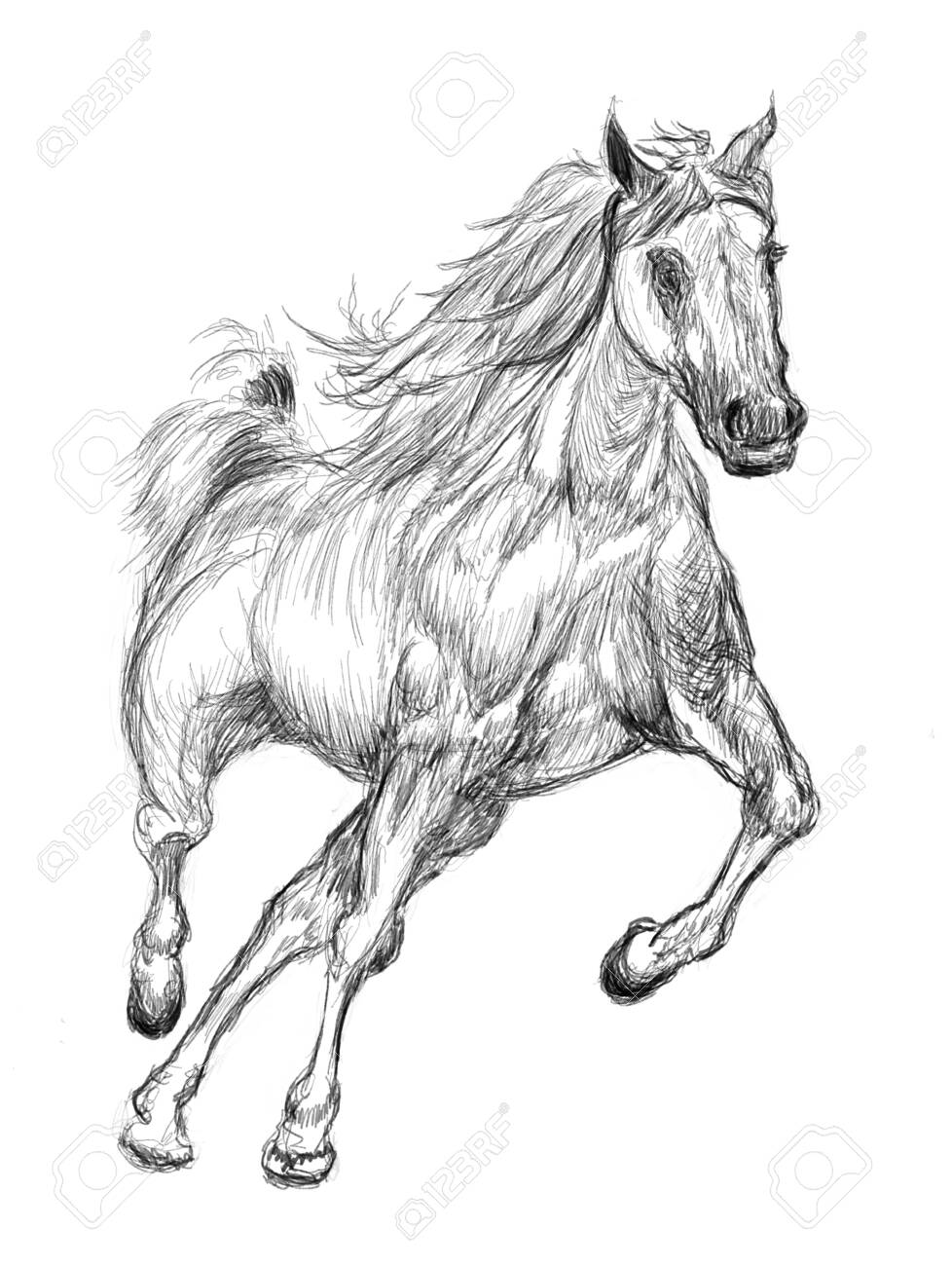 Horse Hand Drawn Illustration Art Design Wall Inspiration Stock Photo Picture And Royalty Free Image Image 135359273