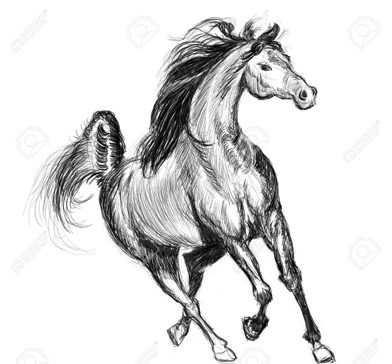 Horse Hand Drawn Illustration Art Design Wall Inspiration Stock Photo Picture And Royalty Free Image Image 135362248