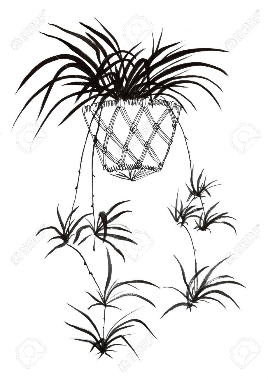 Spider Plant Hand Drawn Illustration Art Design Wall Inspiration Stock Photo Picture And Royalty Free Image Image 138237229