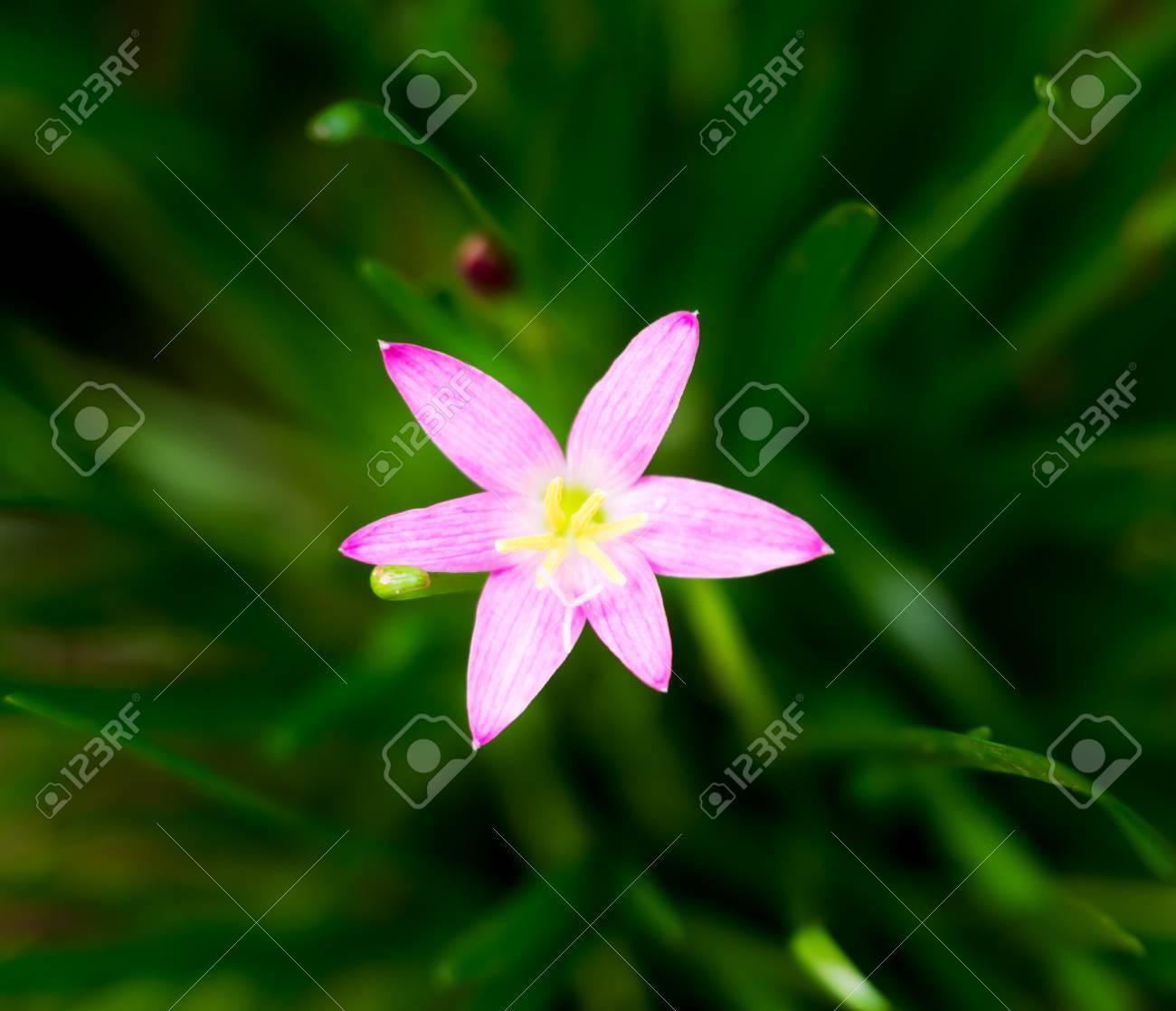 Vintage Landscape Nature Flower Background Pink Flower With Stock