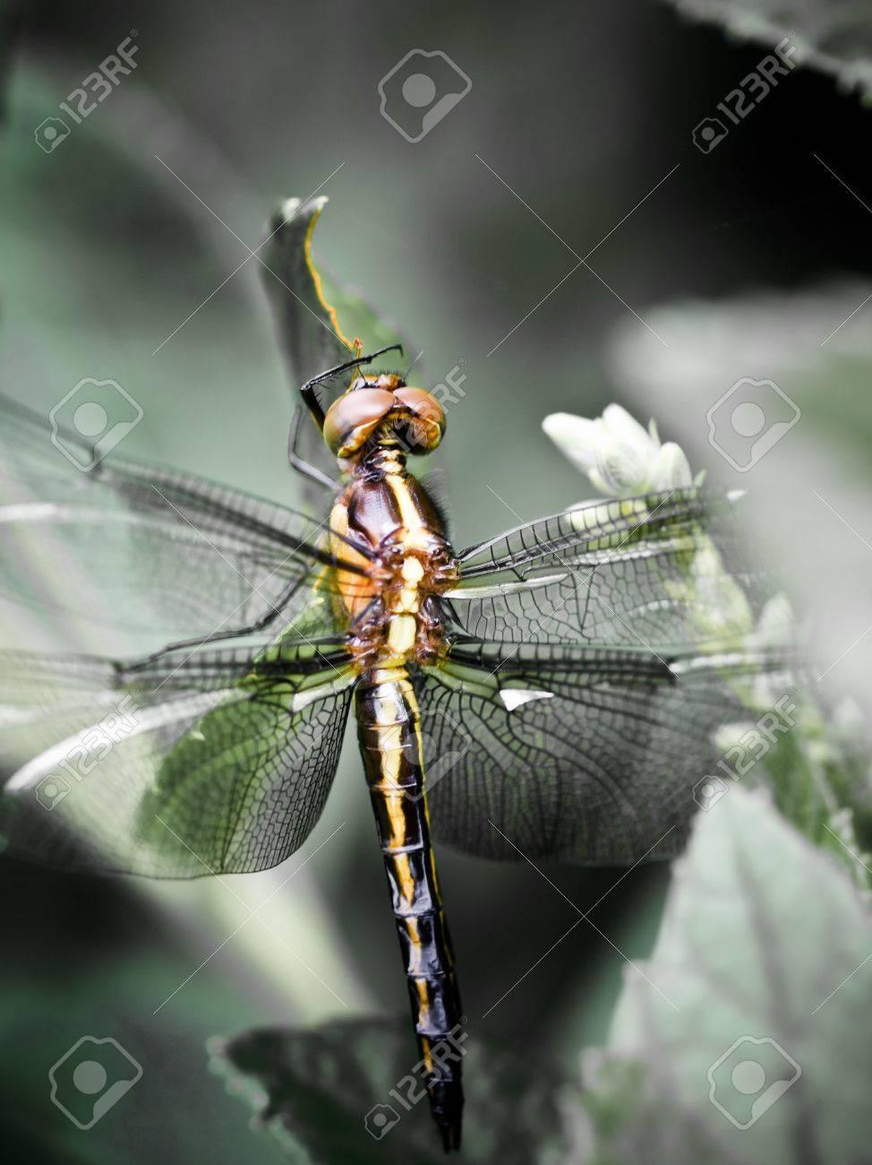 Dragonfly Stock Photo - 5735691