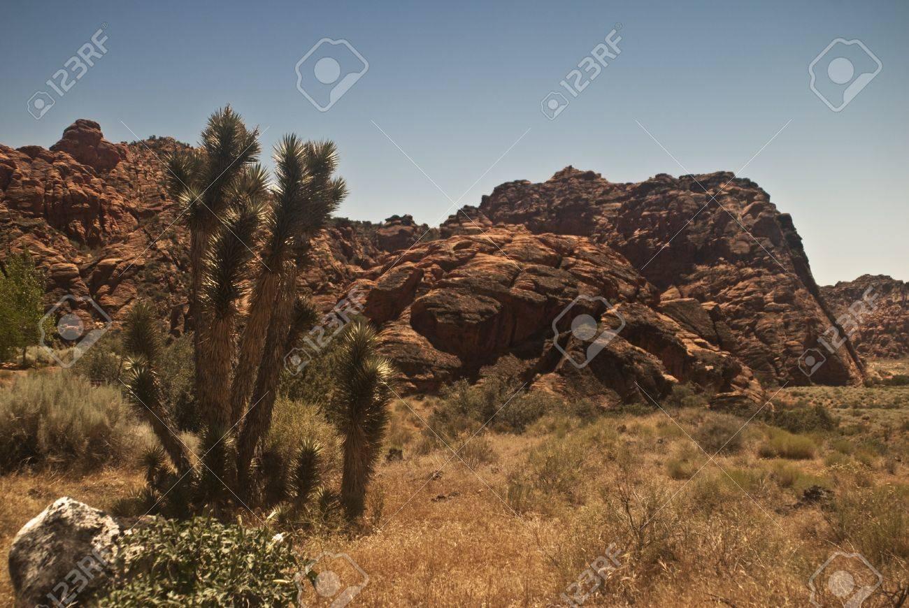 Desert View Stock Photo - 8671351