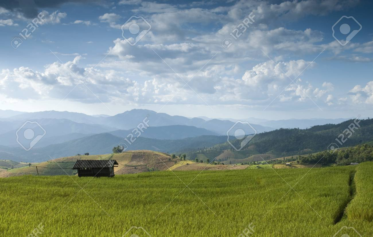 Beautiful rice field in Bong Peang Village, Thailand Stock Photo - 16174774