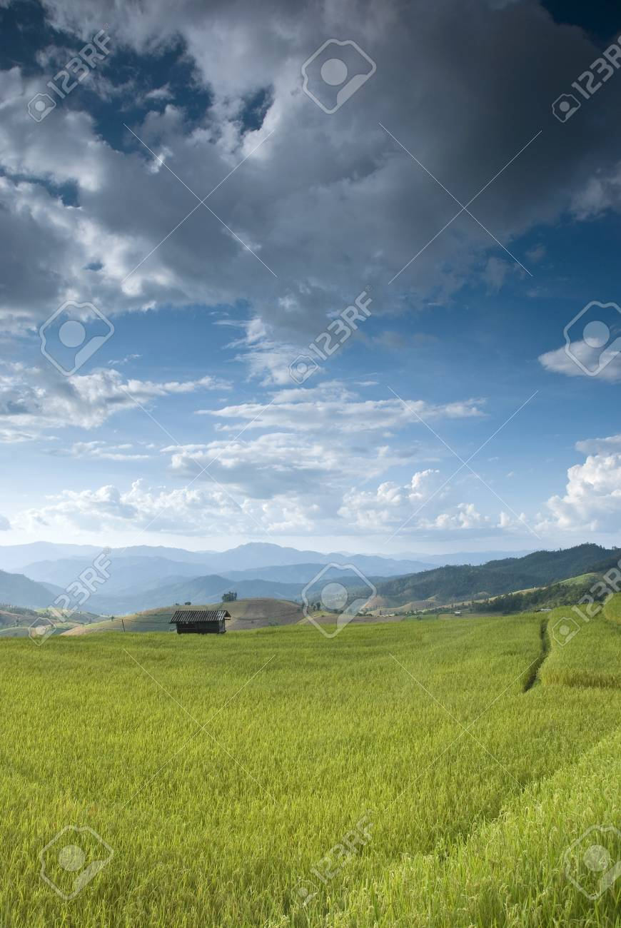 Beautiful rice field in Bong Peang Village, Thailand Stock Photo - 16175227