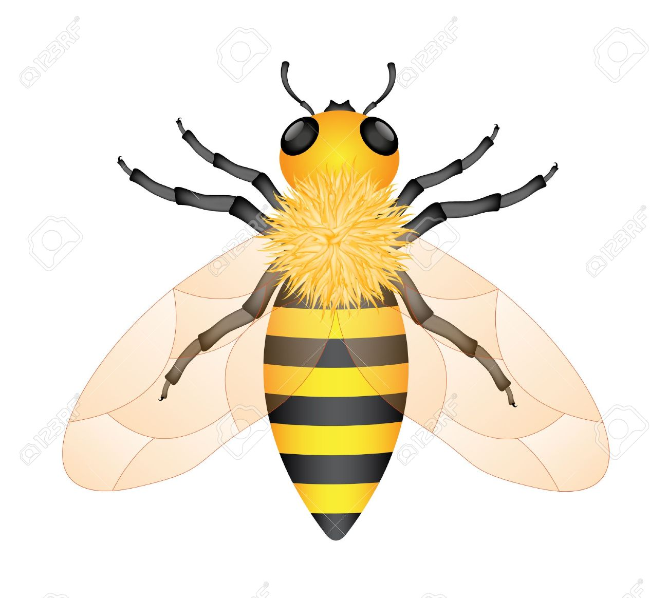 5 653 honeybee cliparts stock vector and royalty free honeybee rh 123rf com free honey bee clipart honey bee clip art 100% free