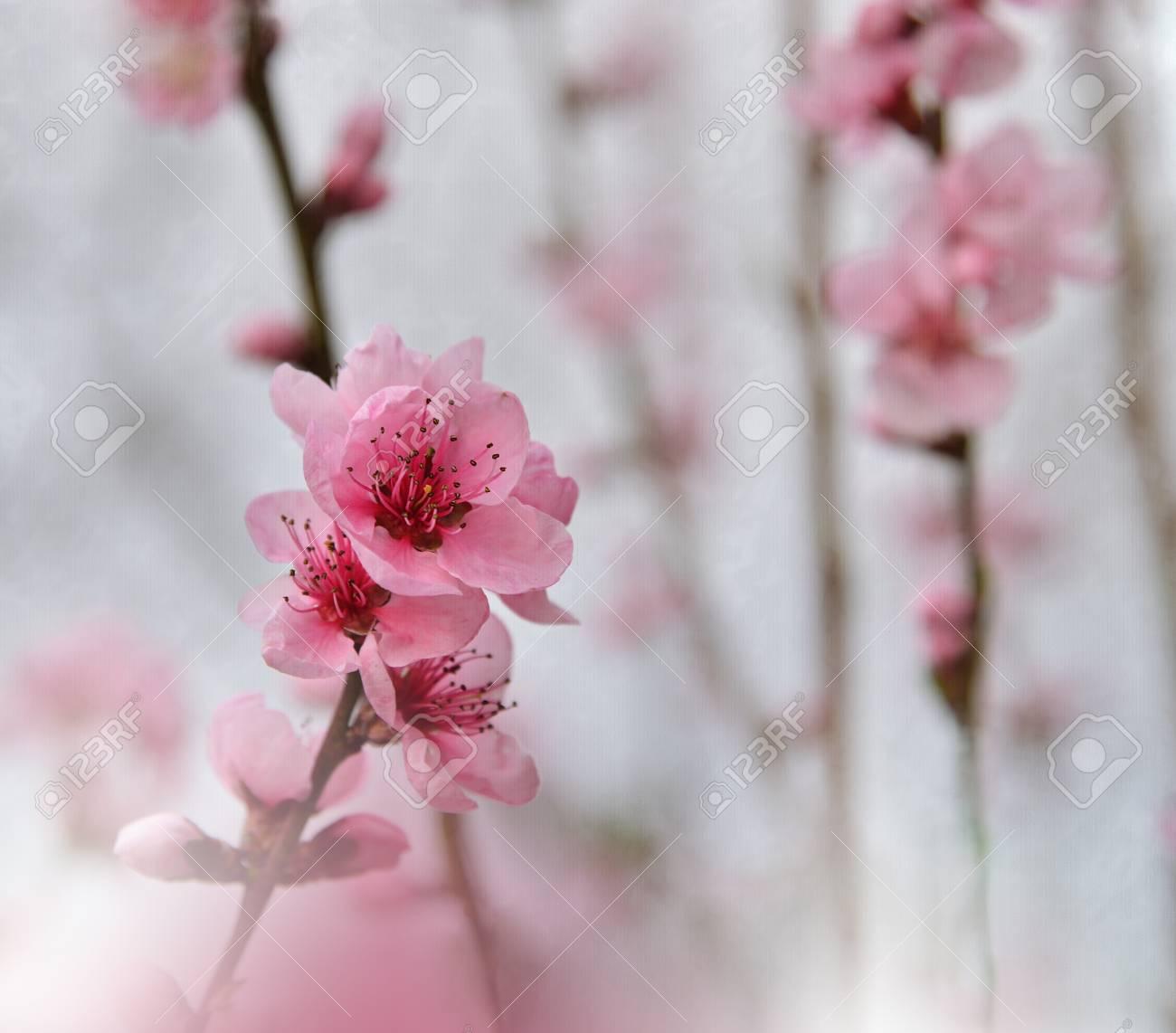 Art Abstract Spring Floral Background For Design Spring Border
