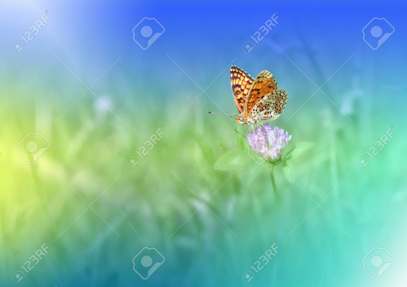 Beautiful Green Nature Background Colorful Artisitic Blue Wallpaper Natural Stock Photo Picture And Royalty Free Image Image 119565804