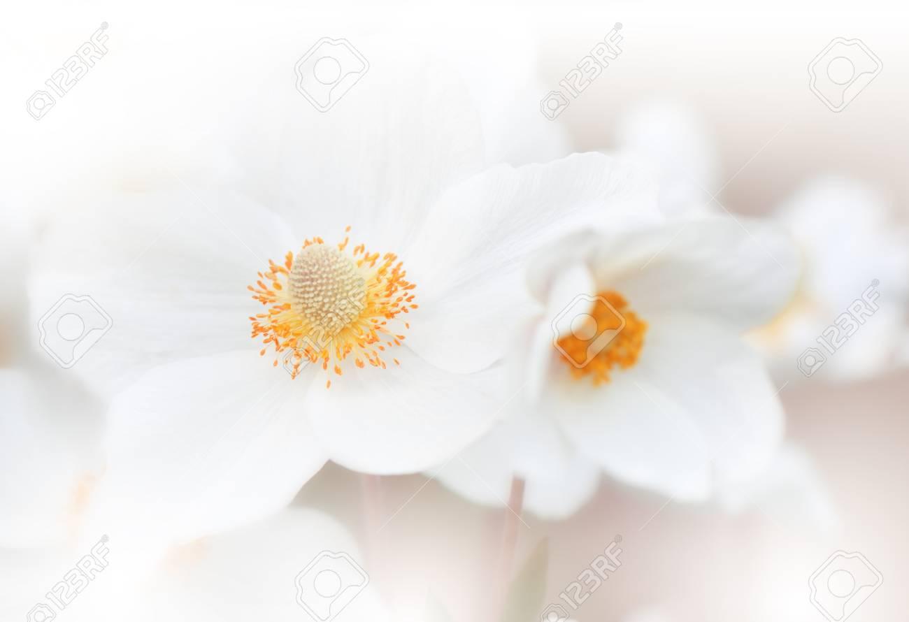 Beautiful Nature Background Macro Shot Of Amazing Spring Magic