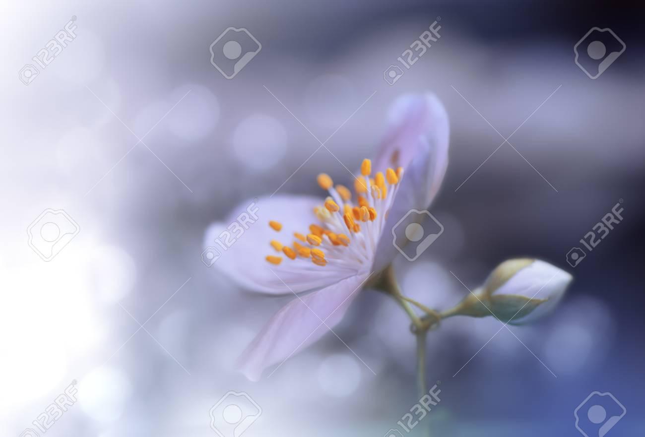 Beautiful Blue Nature Background Macro Shot Of Amazing Spring