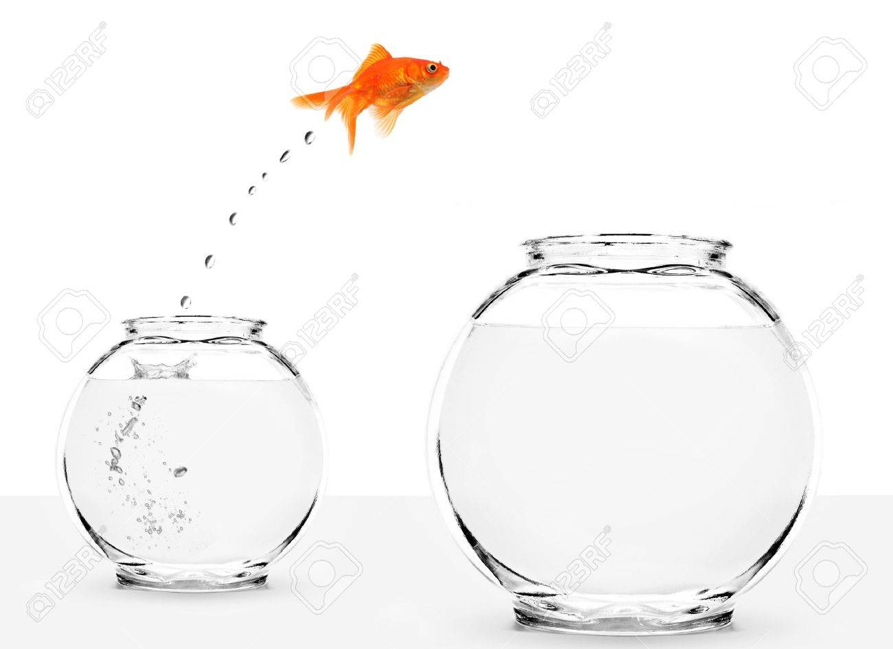 goldfish jumping from small to bigger bowl isolated on white background Stock Photo - 5744707