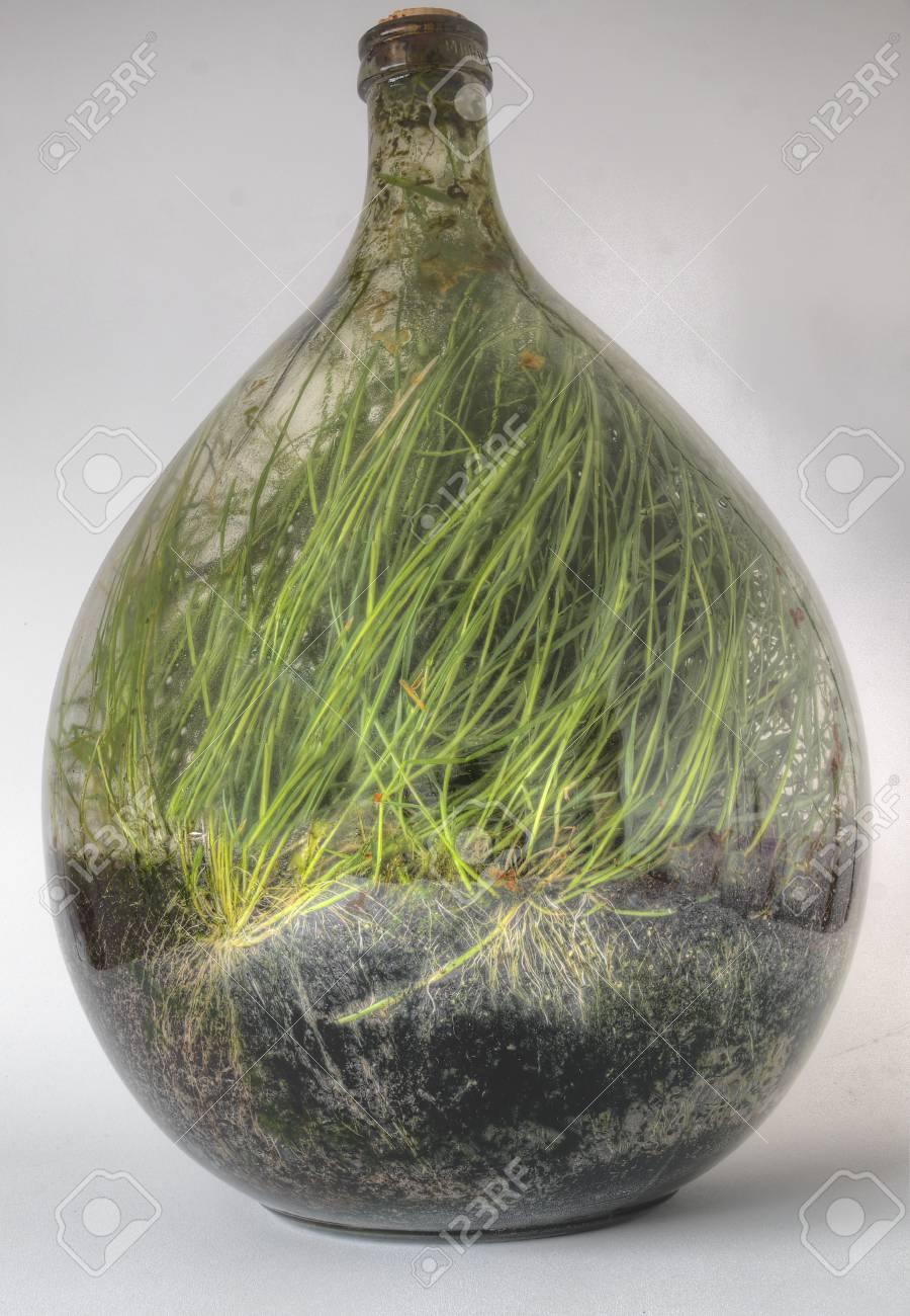 Plants Growing In A Large Glass Terrarium After Several Years Stock