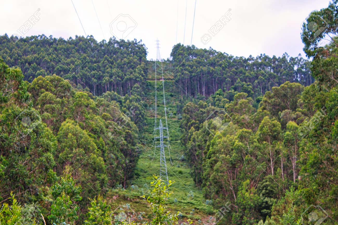 Power cables trough a forest in Galicia, Spain - 151447354