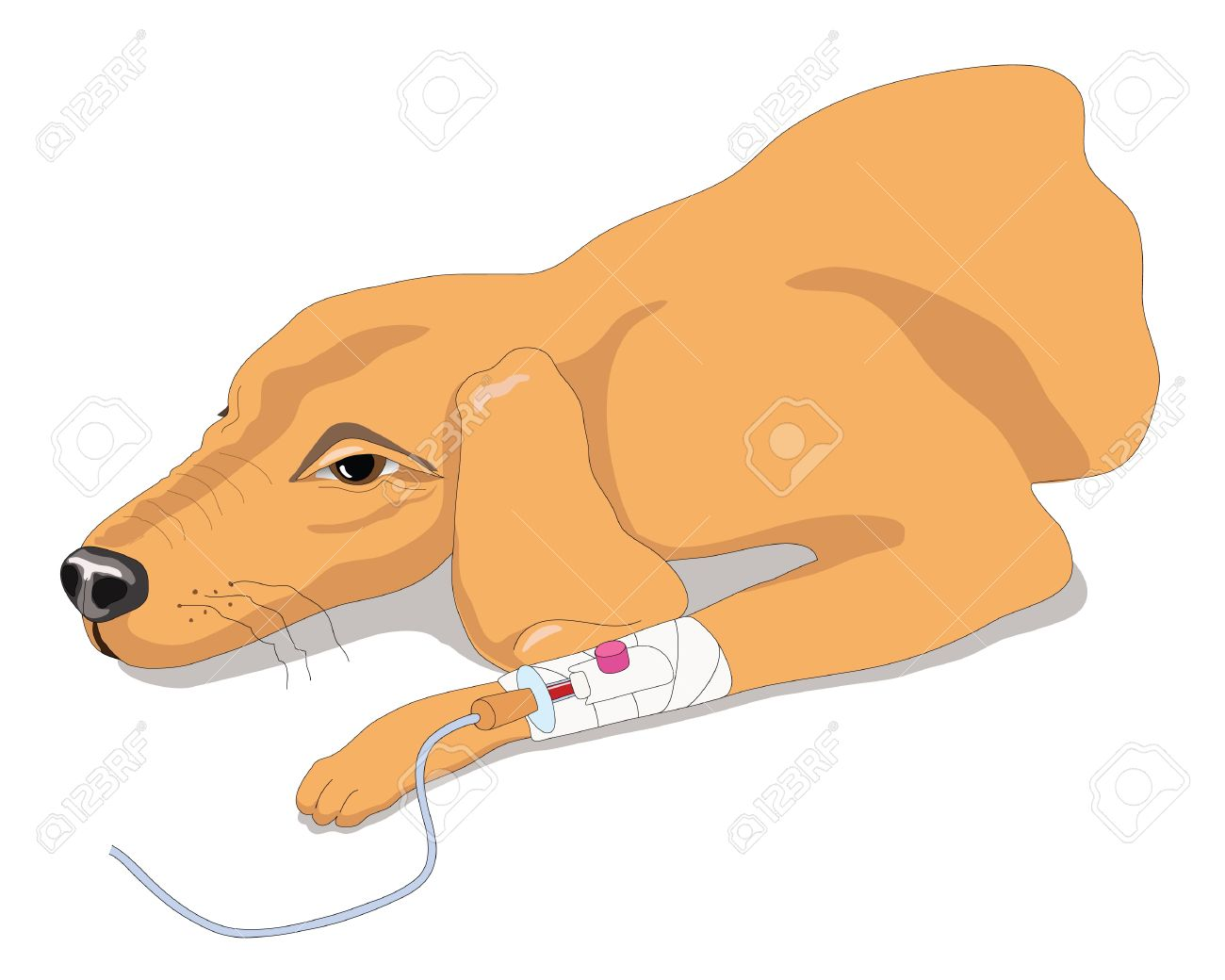 Sick dog has an Infusion therapy in a veterinary clinic Stock Vector - 9711510