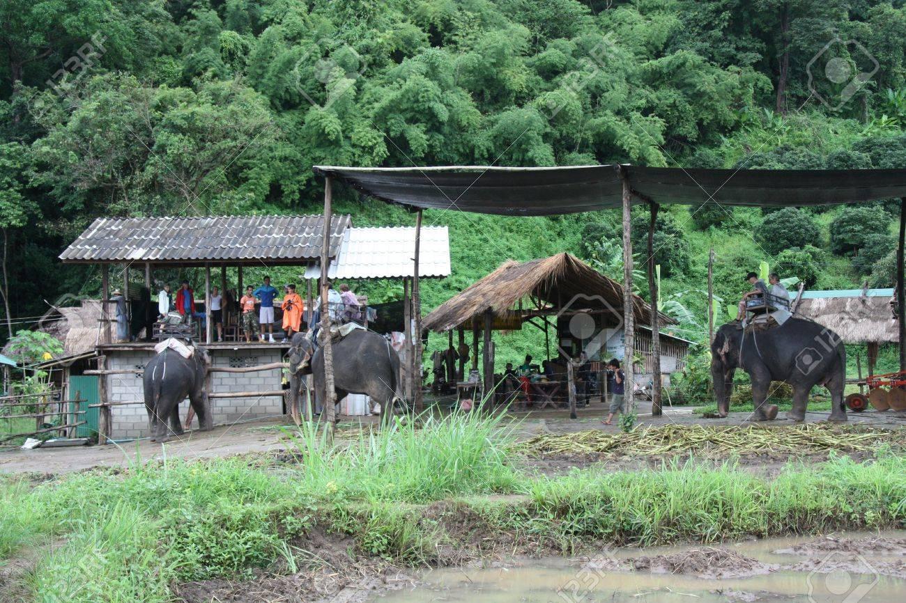 Tourists riding elephants at the Elephant Farm in Chiang Mai, Thailand -31.07.2011 Stock Photo - 13021413