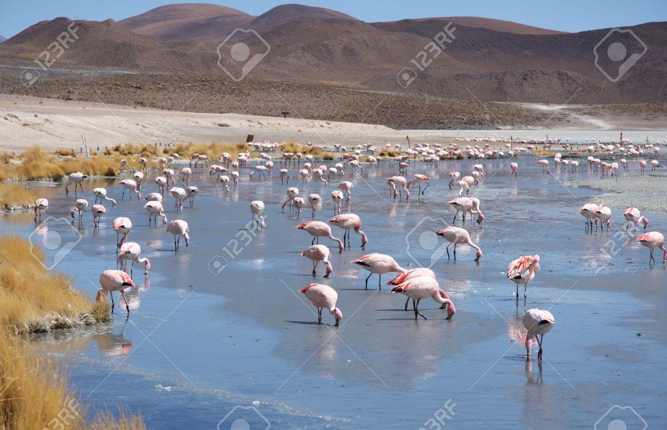 Risultati immagini per riserva avaroa in bolivia