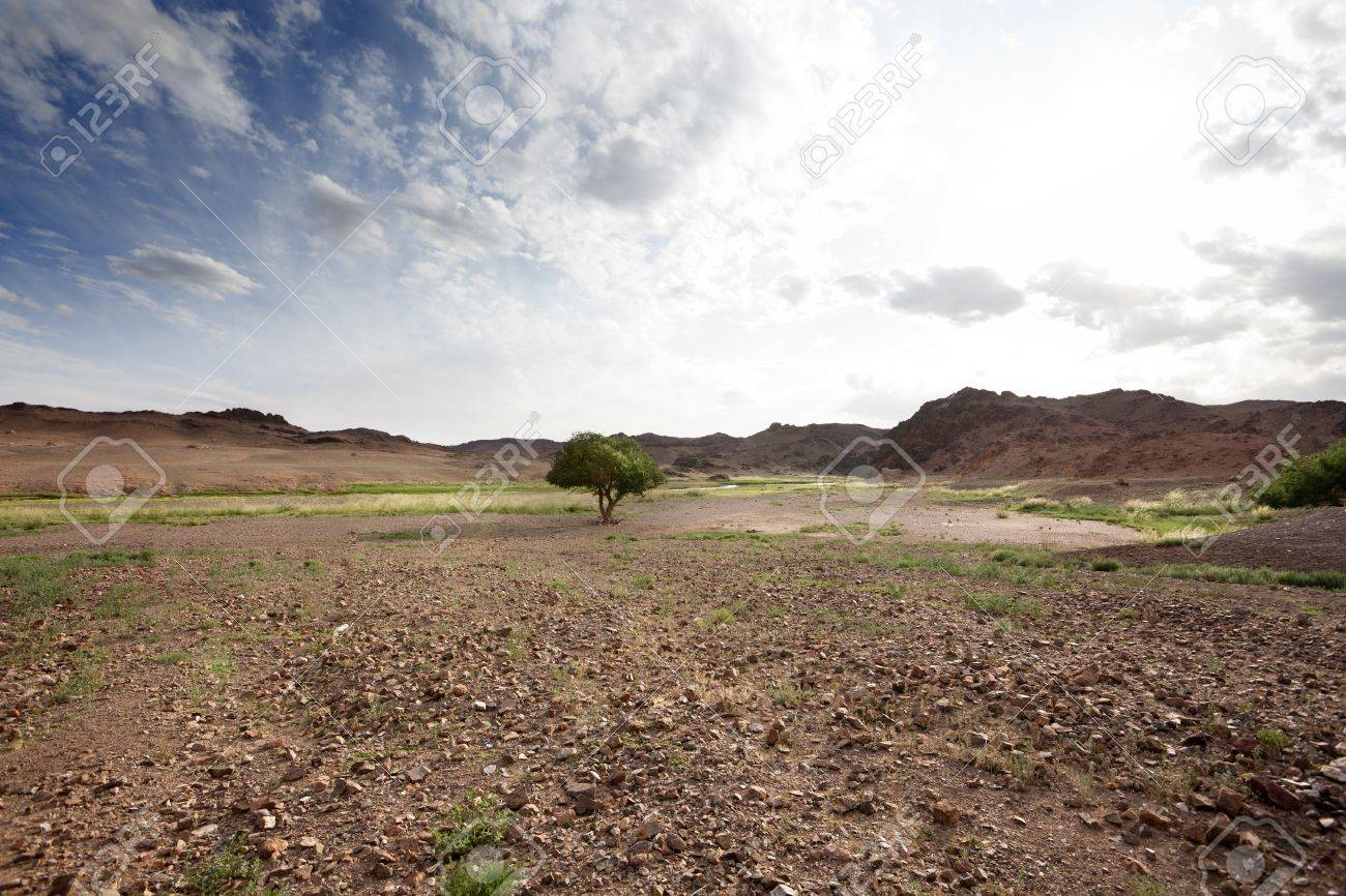Gobi Desert landscape in Mongolia. grim picture Stock Photo - 17589556