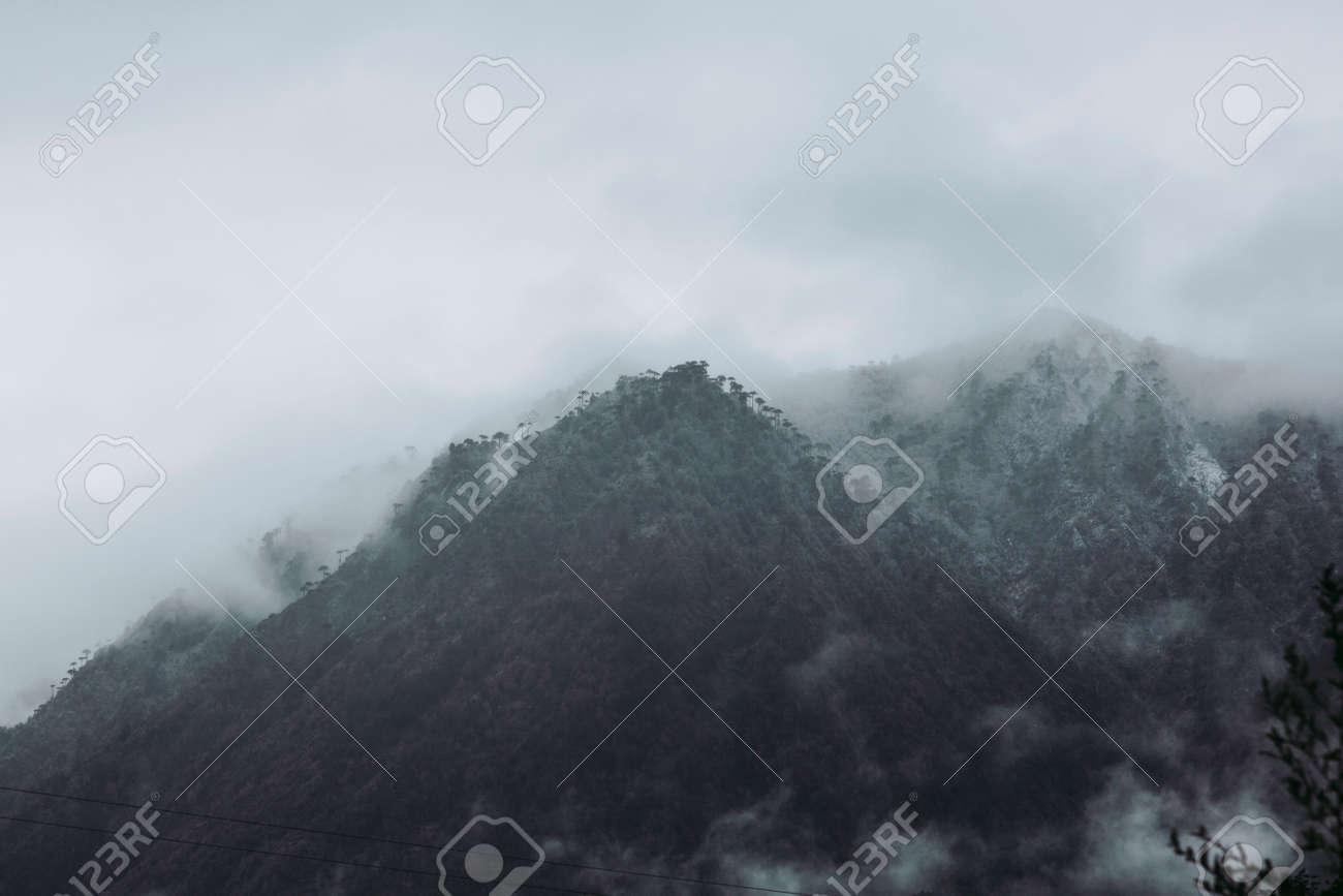 Winter in Conguillio Park. Chile - 166631955