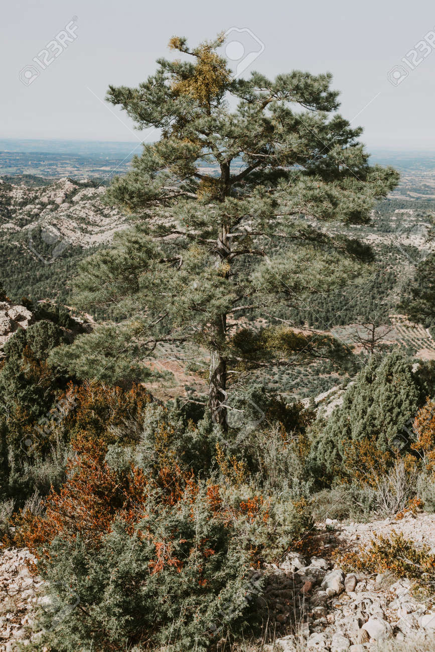 Path to Galera Peak. Teruel province. Spain - 166728536