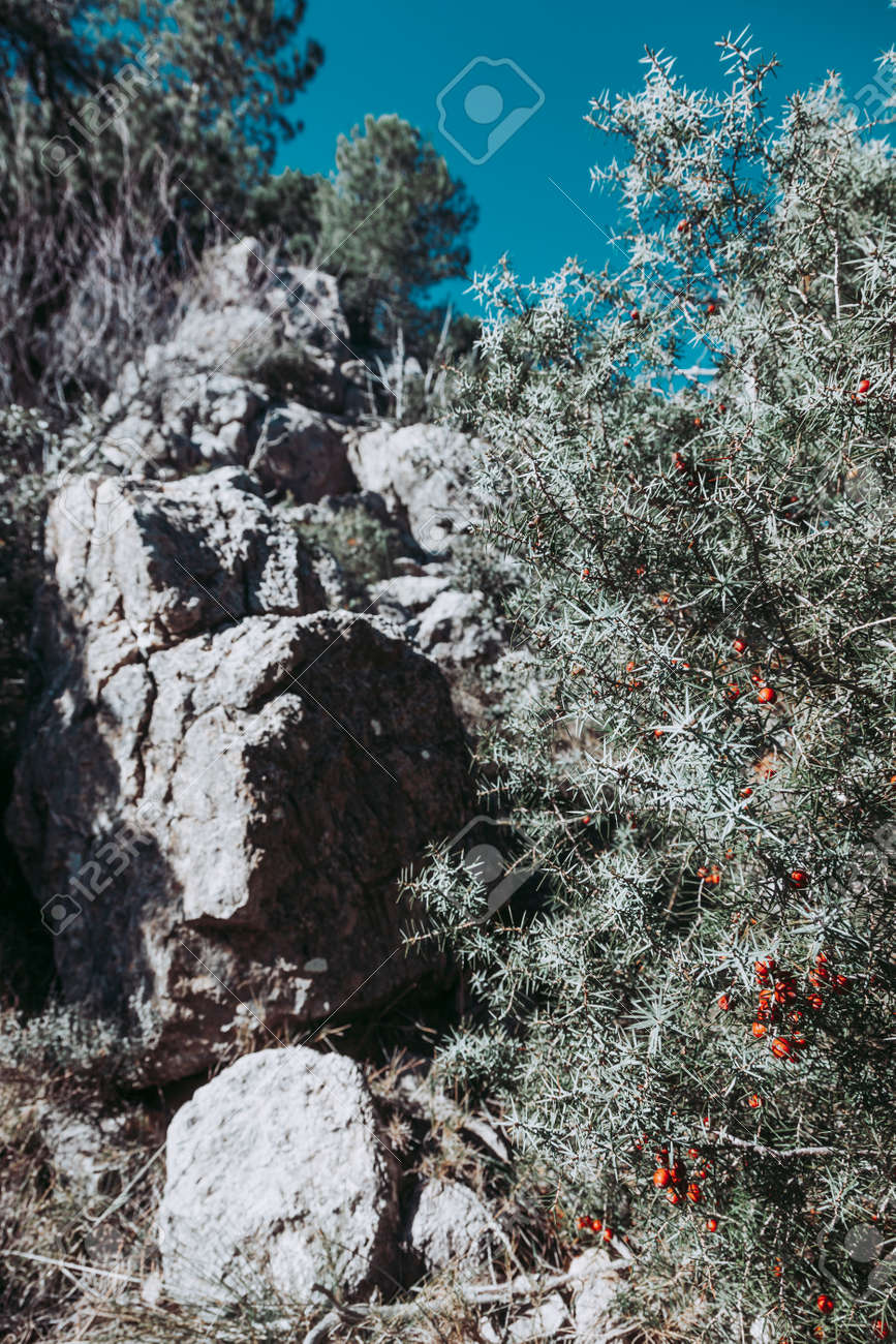 Path to Galera Peak. Teruel province. Spain - 166687485