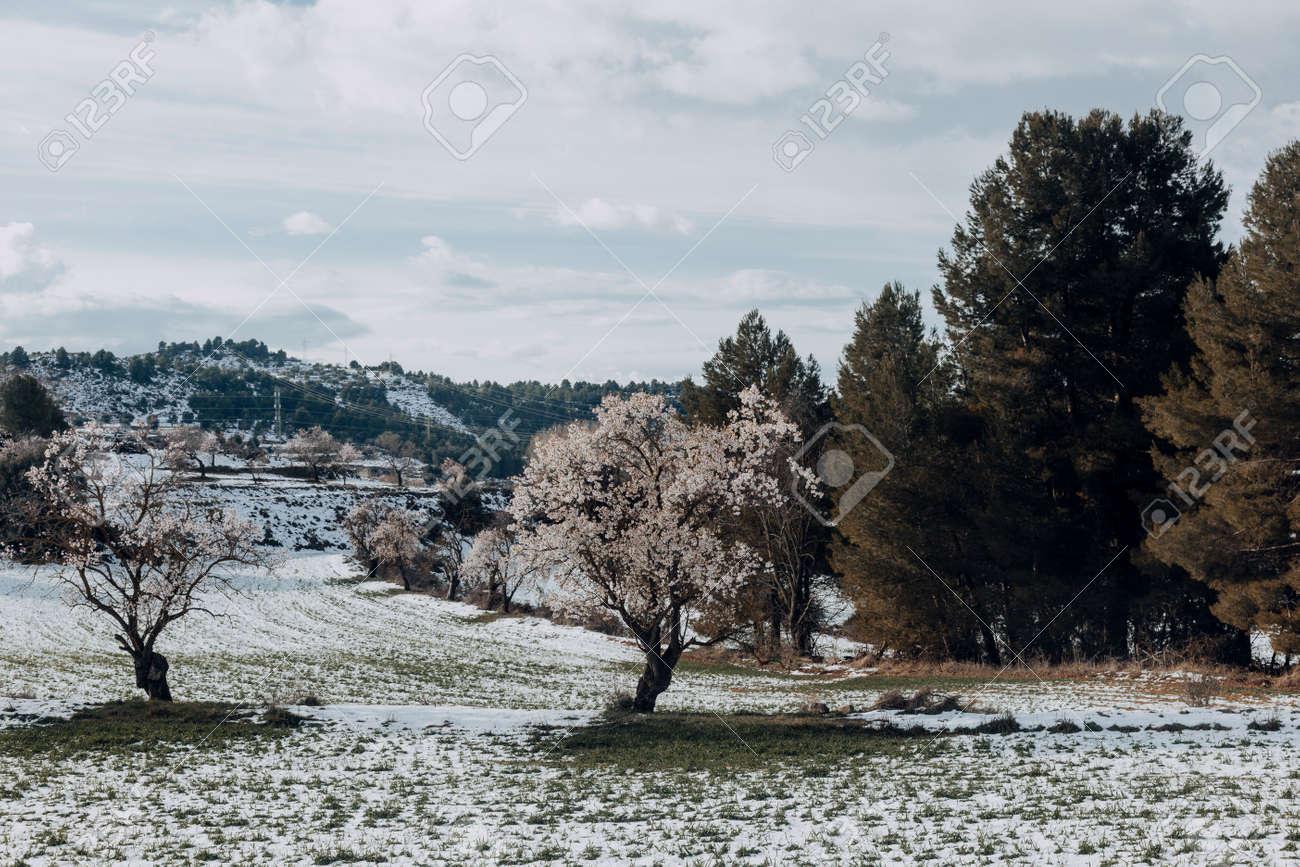 Winter in the fields around Valderrobres. Teruel province - 165804057