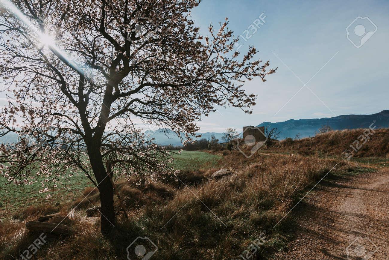 Valderrobres in Spring. Teruel province - 166687508