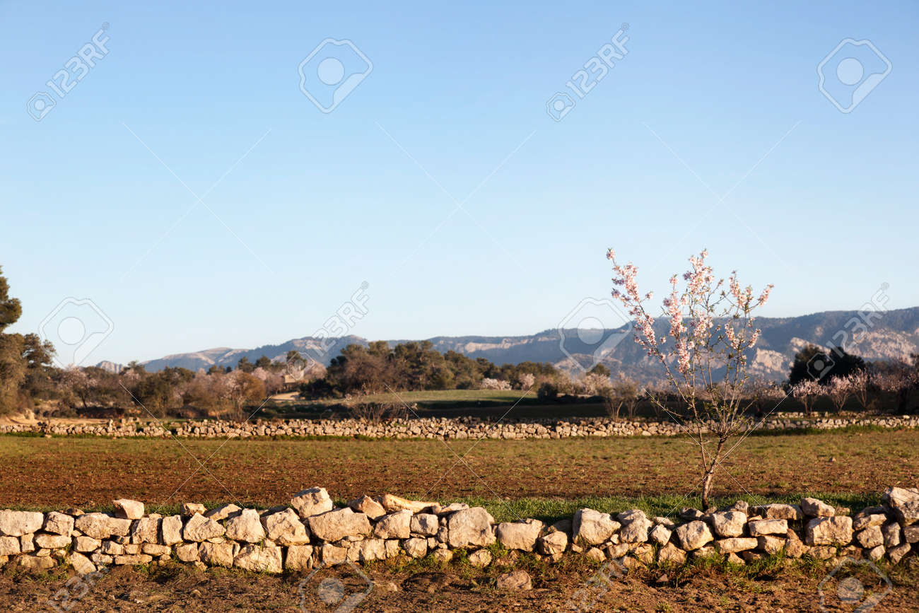 The art of building walls in dry stone, traditional in rural areas of Croatia, Cyprus, France, Greece, Italy, Slovenia, Spain and Switzerland, was inscribed today by Unesco in its Representative List of the Intangible Cultural Heritage of Humanity - 167746290