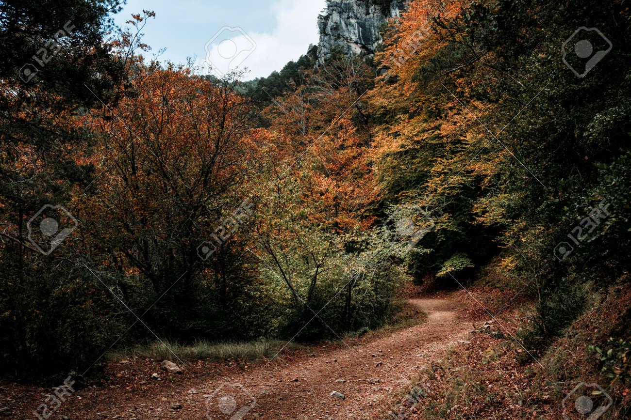 Autumn in the Beech trees of Los Ports Natural Park. La Sénia, Catalonia - 170515465