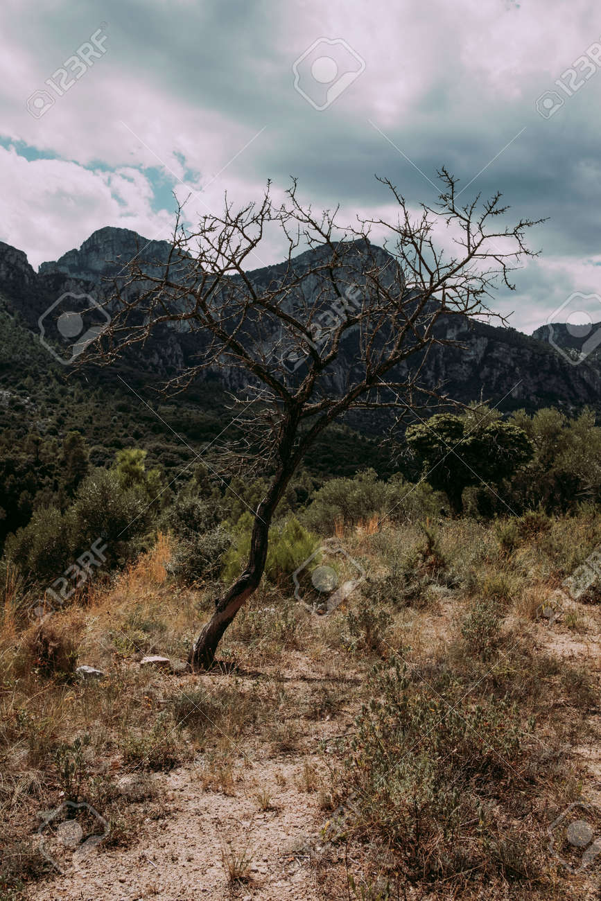 Fields in Matarranya. A region of the province of Teruel, Spain - 170515482