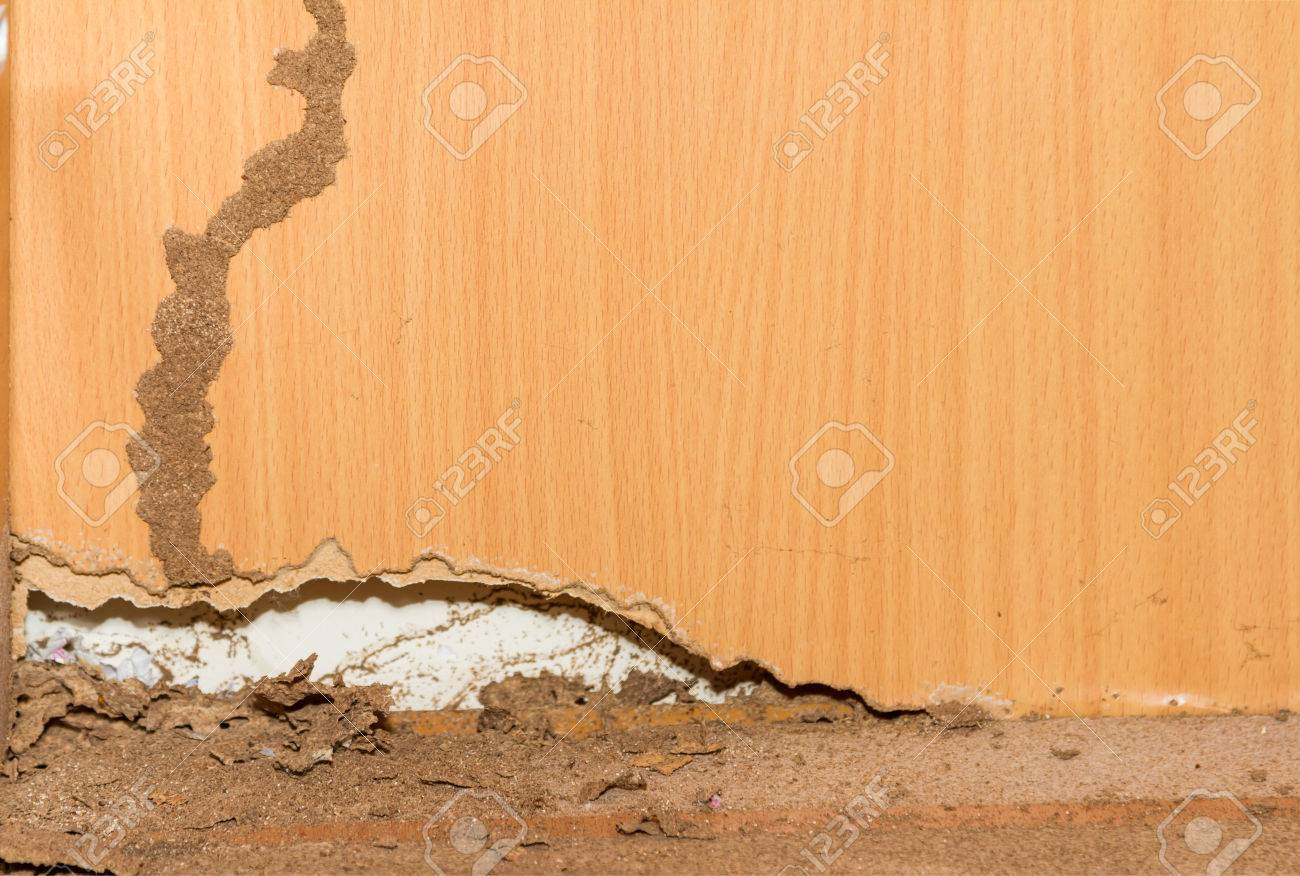 Termites on old wood background for decorate. Stock Photo - 41933350
