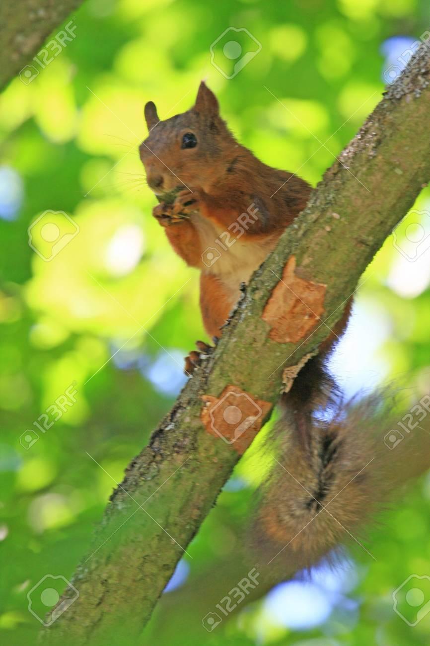 squirrel - 3336179