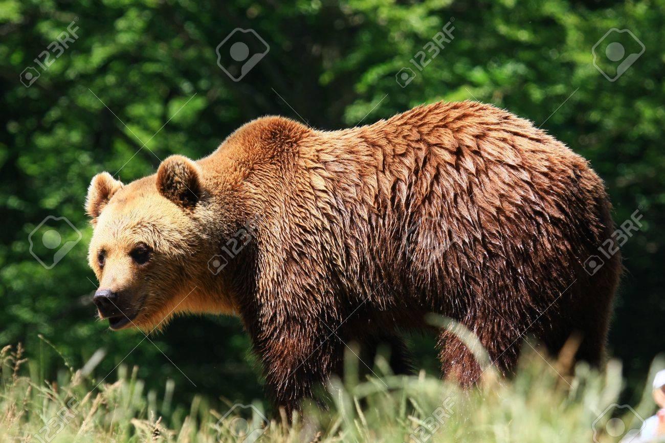 bear - 3342367