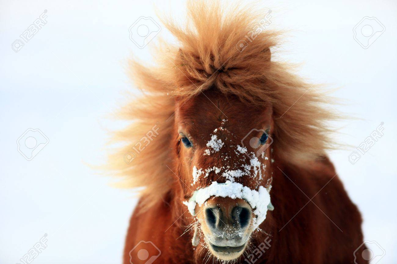 pony - 6798830