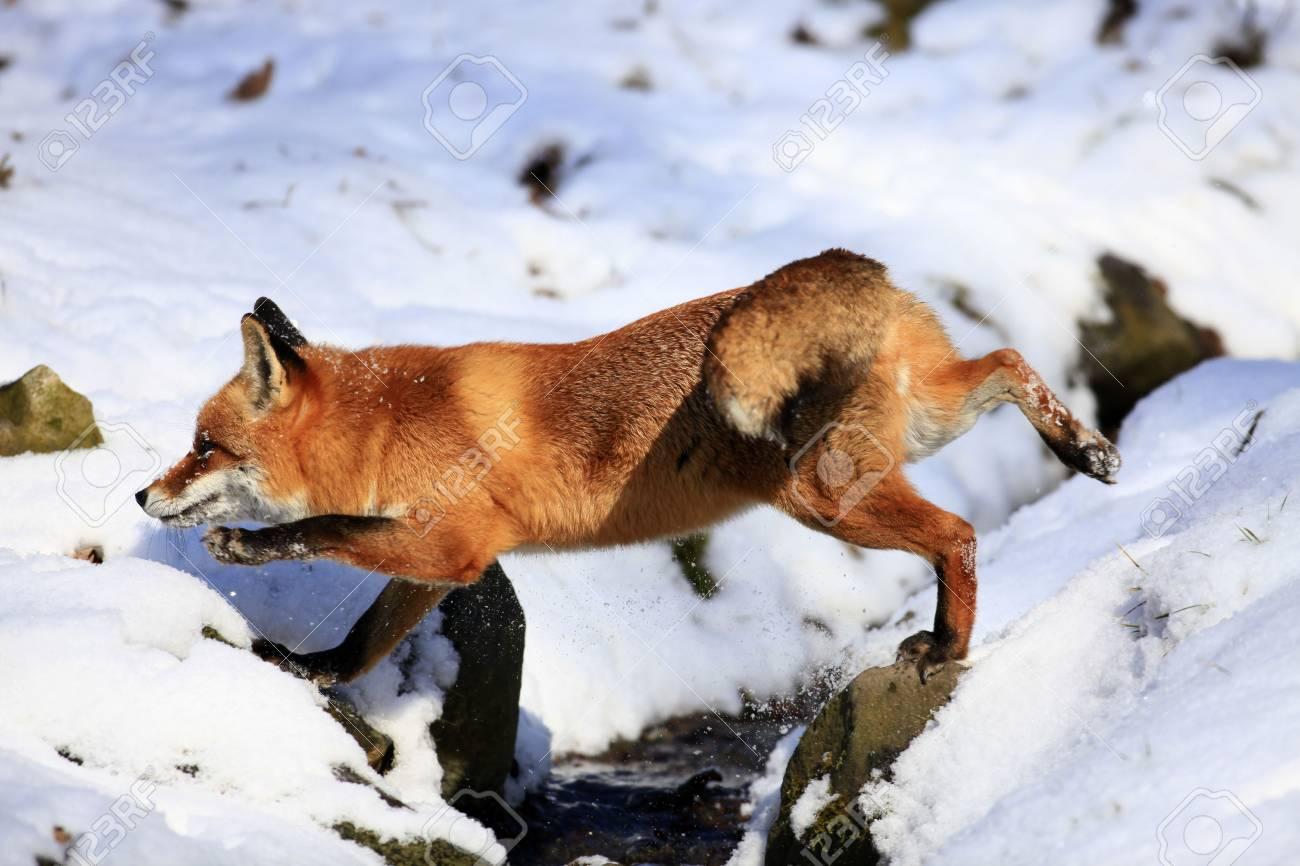 fox - 6798817