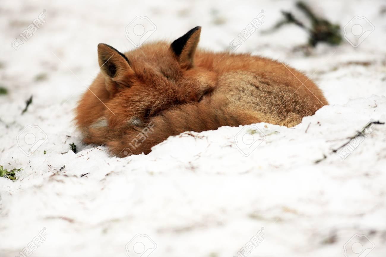 fox - 6798826