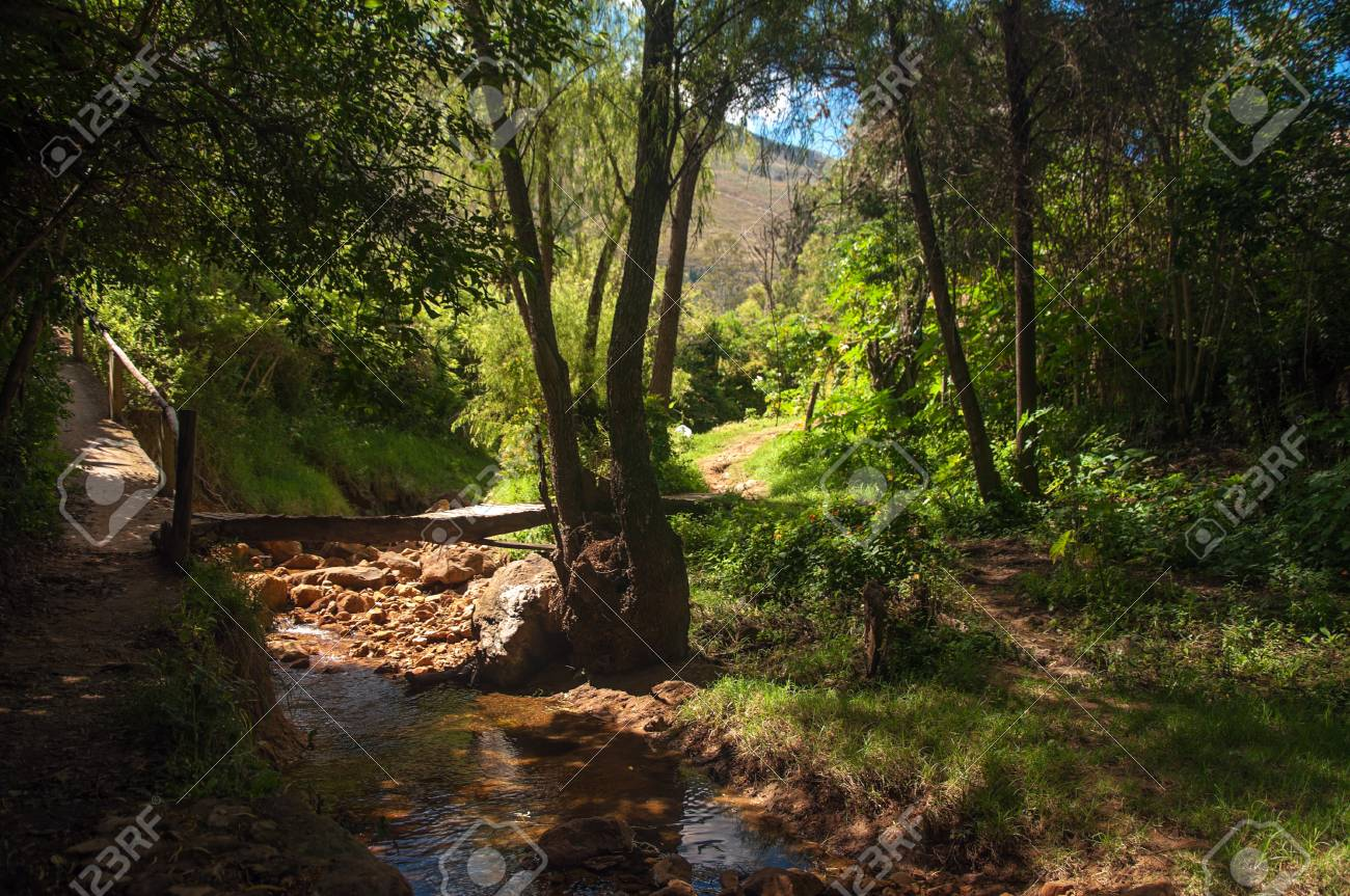 A small stream and path running through a forest Stock Photo - 15842715