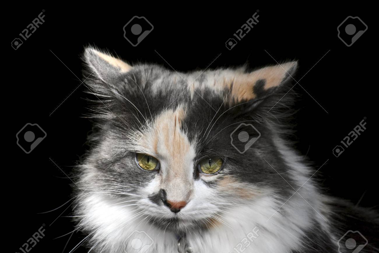 Pretty Cat Stock Picture And Royalty Free Image Image