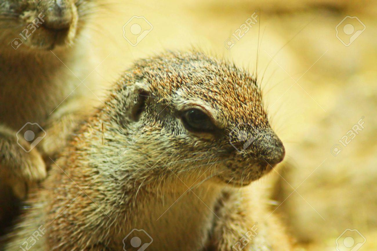 Critter Close Up Stock Photo - 5409446