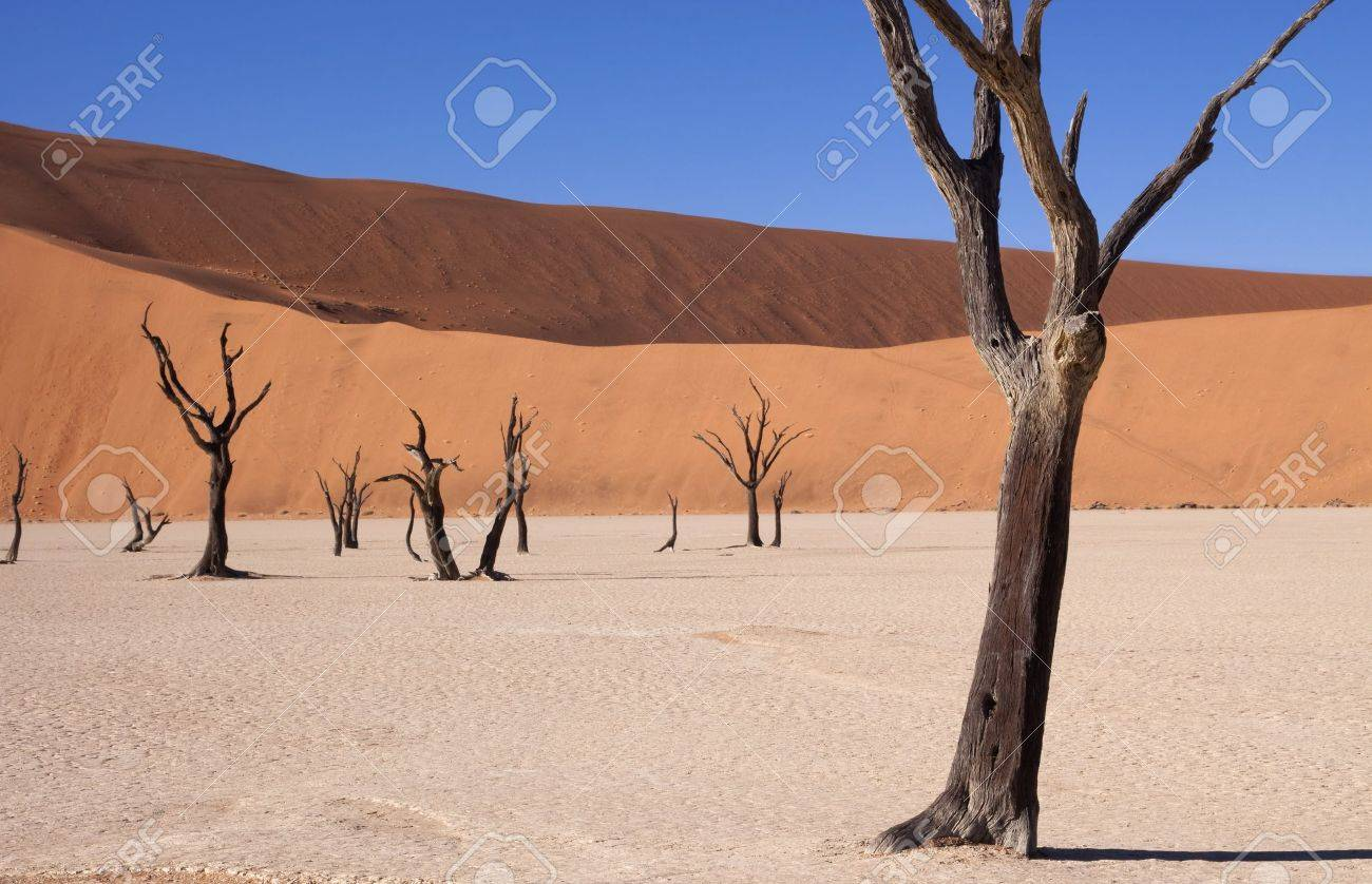 Dead acacia tree at dead vlei in Namibia - 7040199