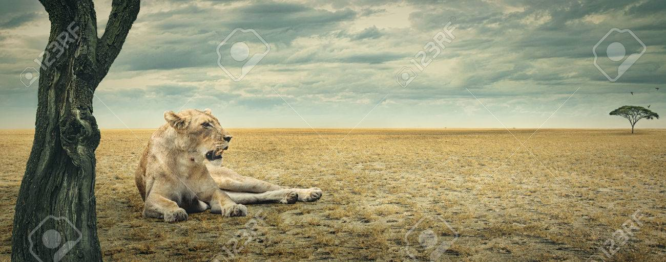 Lioness enjoying a rest in the shade of a tree on the african plains Stock Photo - 40677028